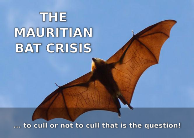 The Mauritian Bat Cull… Tackling Some Illegitimate Outcries !
